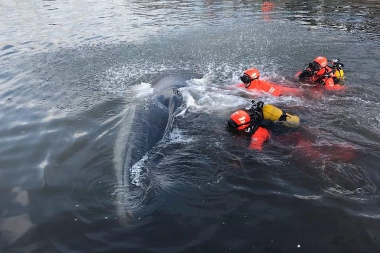 Une baleine bouche le port de marseille informations calanques - Sardine port de marseille ...